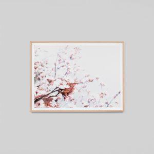Warranbrooke Spring Blossom