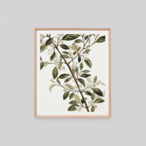 Warranbrooke Buckthorn Branch 1 Framed Print